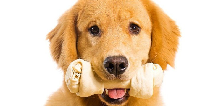 Por-qué-es-bueno-darle-huesos-comestibles-a-tu-perro